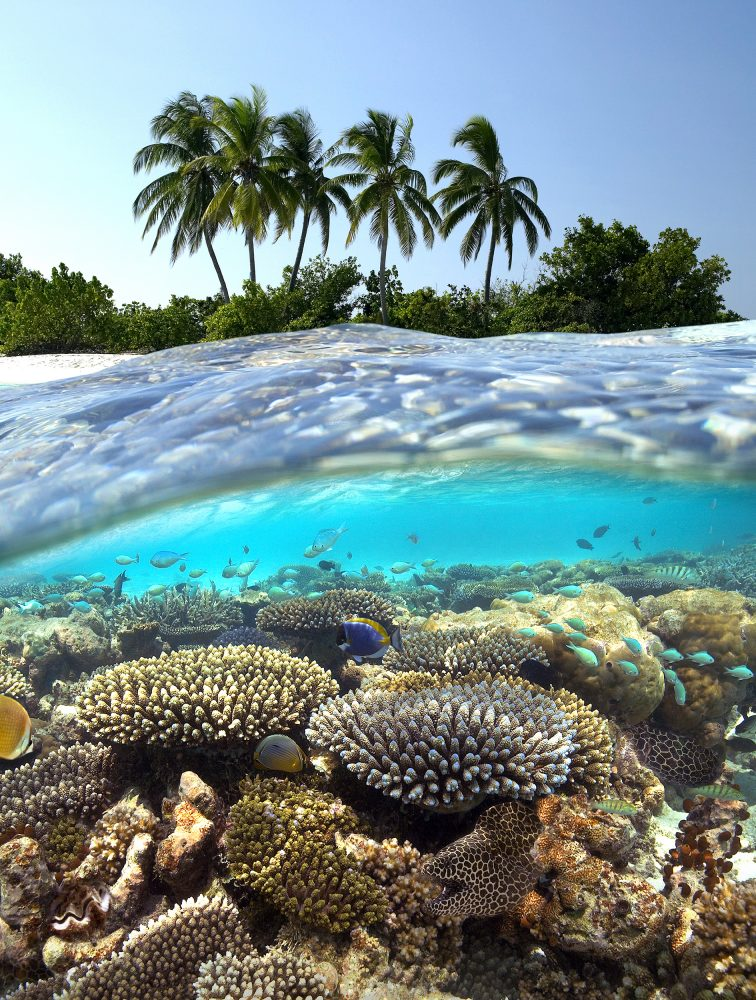 Tropical Reef - Maldives